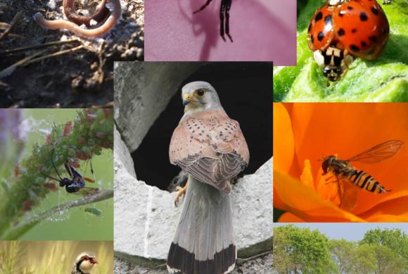 03/2017 – La biodiversité, un levier agro-écologique au service de la production.